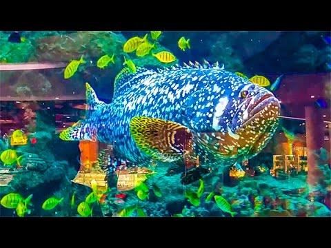 Rybki-v-Akvariume-Detskij-Razvlekatelnyj-TSentr-Rybki-v-akvariume-Mnogo-Ryb