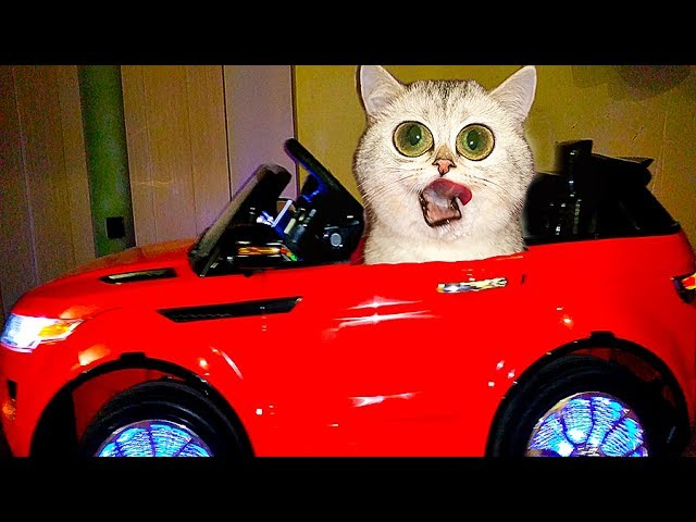 DETI-UGNALI-MASHINU-PRANKI-nad-koshechkoj-SIMKOJ-Video-pro-kotikov-Bad-Baby-Driving-Parents-Car