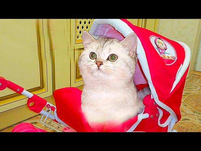 PRANKI-nad-SIMKOJ-Video-dlya-detej-Rozygryshi-i-Party-dlya-Koshechki-Kittens-Prank-Nastyushik-i-Simka