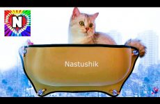 NASTYA-VLOG-kitten-academy-koty-yutubery-funny-cat-SIMKA-Video-pro-kotov-Kotik-SIMKA-i-Nastyushik