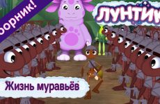 ZHizn-muravyov-Luntik-Sbornik-multfilmov-2018
