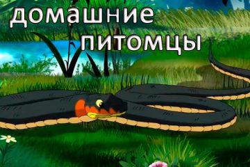 Razvivayushhie-multfilmy-Sovy-Moi-Domashnie-Pitomtsy-Terrarium