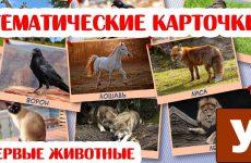 Uchim-nazvaniya-zhivotnyh-Kartochki-dlya-detej-ZHivotnye-i-ptitsy