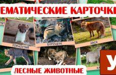 Kartochki-dlya-detej-Lesnye-zhivotnye-Uchim-novye-slova