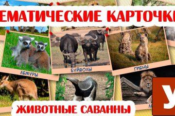 Kartochki-dlya-malyshej-Prezentatsiya-Obitateli-savanny