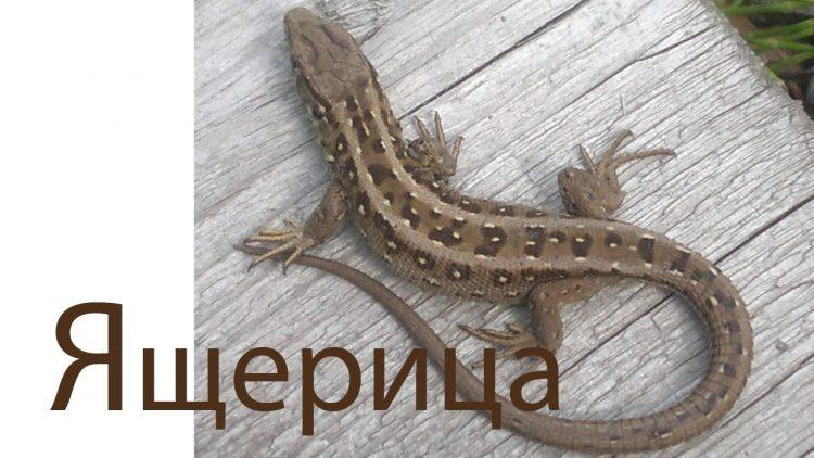 Razvivayushhie-igry-dlya-detej-Bukva-YA