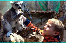 ZOOPARK-dlya-Detej-i-Danik-Lemury-Madagaskara-Enoty-Surikaty-Nosuhi-Obezyanki-i-mnogie-drugie