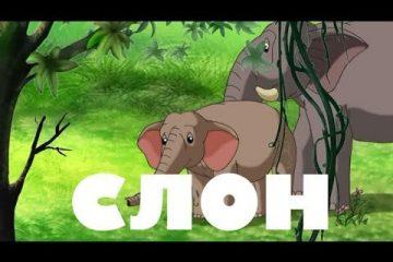 Uroki-Tetushki-Sovy-Uroki-zhivoj-prirody-Slon