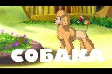 Uroki-Tetushki-Sovy-Uroki-zhivoj-prirody-Sobaka