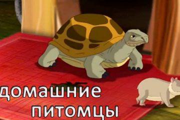 Razvivayushhie-multfilmy-Sovy-Moi-domashnie-pitomtsy-CHerepaha