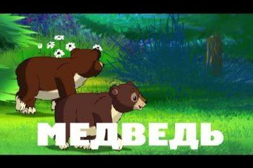 Uroki-Tetushki-Sovy-Uroki-zhivoj-prirody-Medved